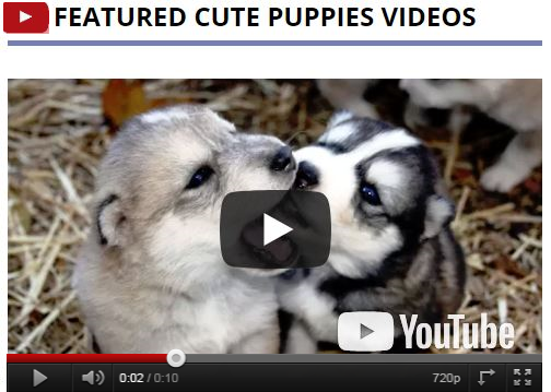 Dog Names Or Cute Puppy Names With Fun Ideas Cute Pet Dogs