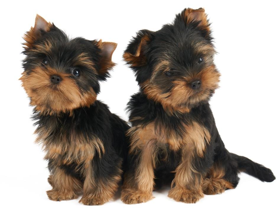 Cutest Pet Dogs Cute Puppies Cute Pet Dogs Dog Breeds